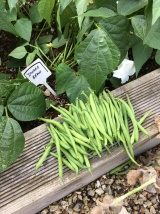 Harvesting at the Station plot July 2017