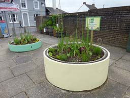 Barrels and concrete planters 2015-06-15 08.12.58