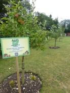 Jubilee Field Orchard 2016