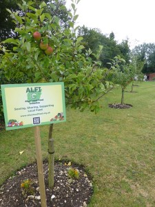 Orchard August 2015 012