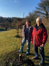 Lesley & Ann with 'Marjorie' the new plum tree